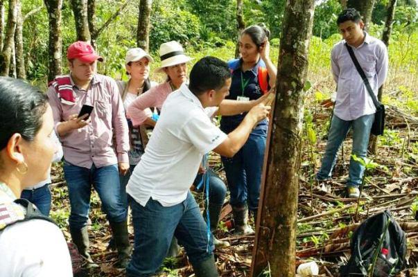 SENA contribuye a aumentar cultivo y producción de caucho en Colombia